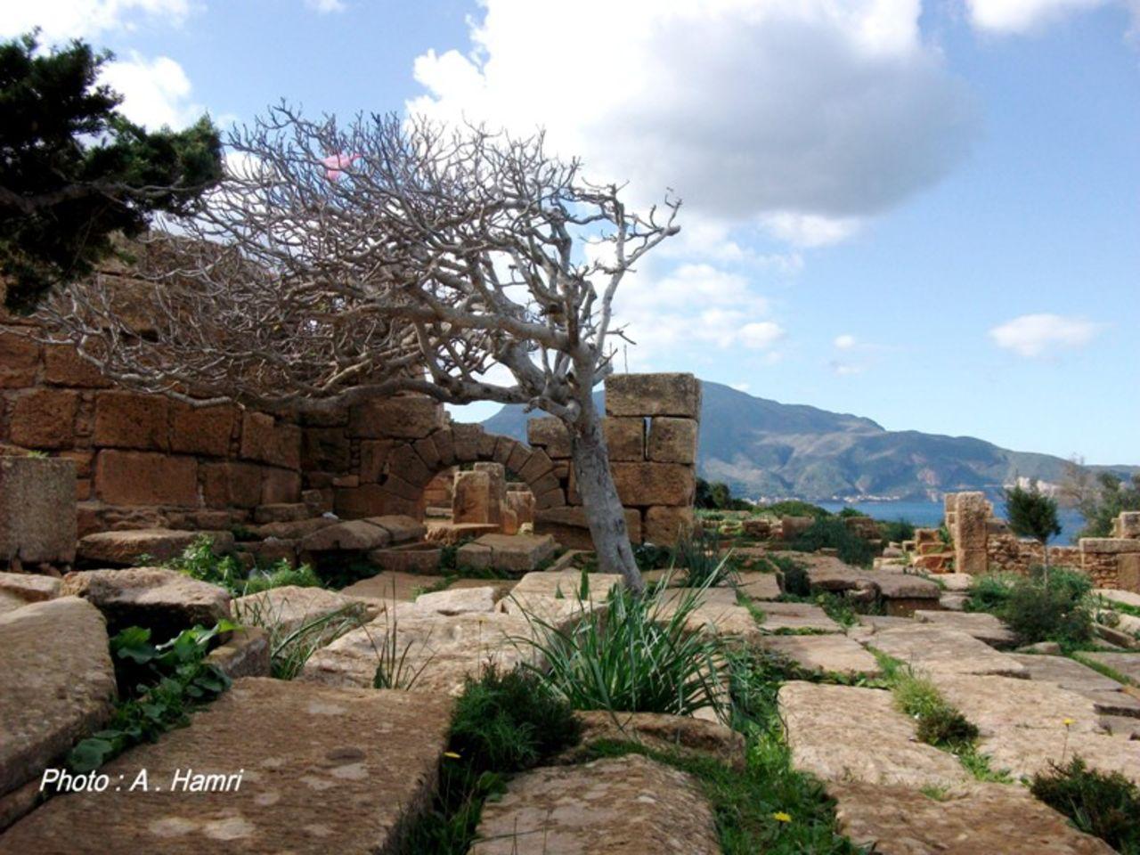 Abdelkrim Hamri Les ruines Romaines de Tipasa