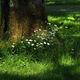 ABELOUS-AZEMA - bouquet de marguerites