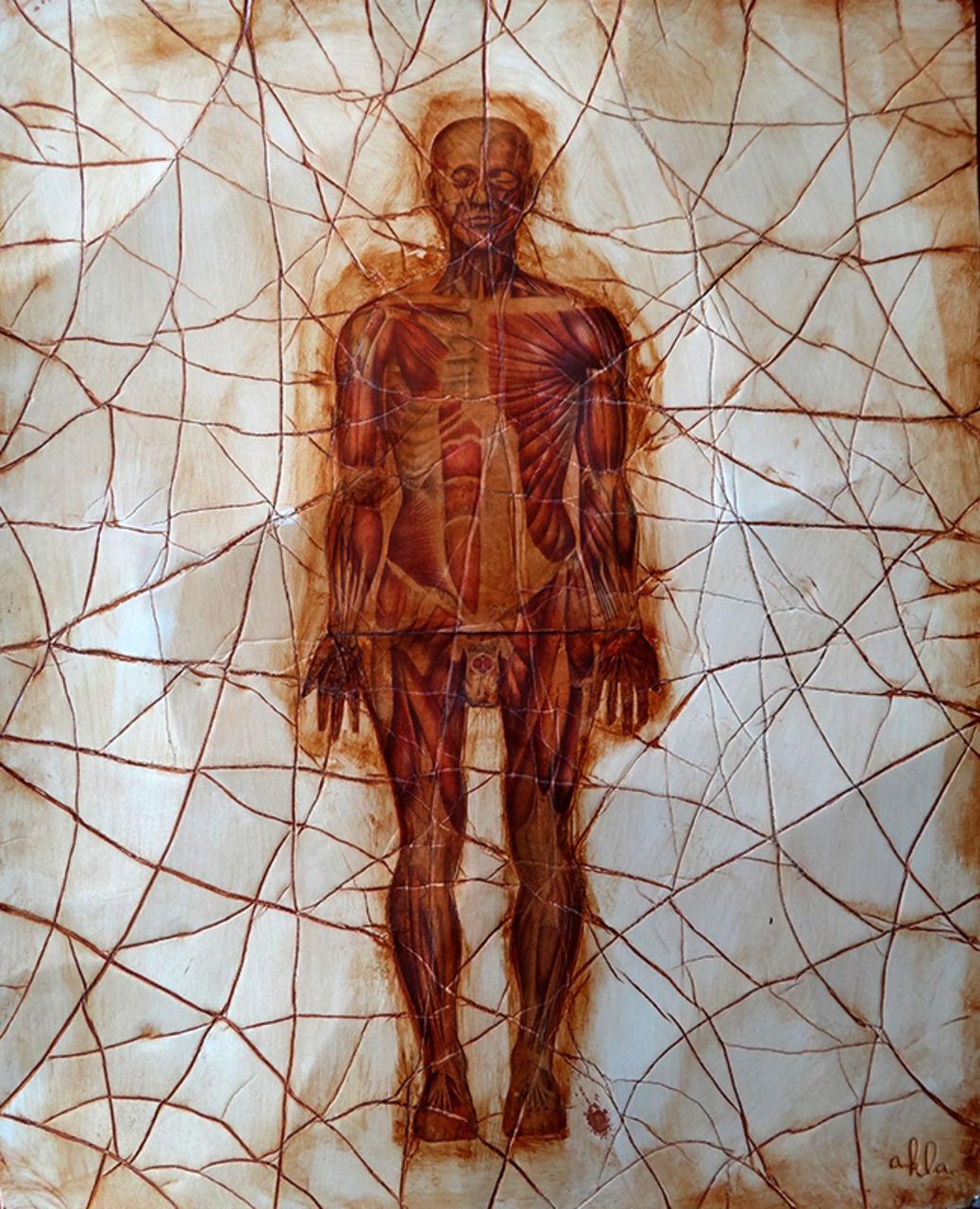 akla composition anatomique