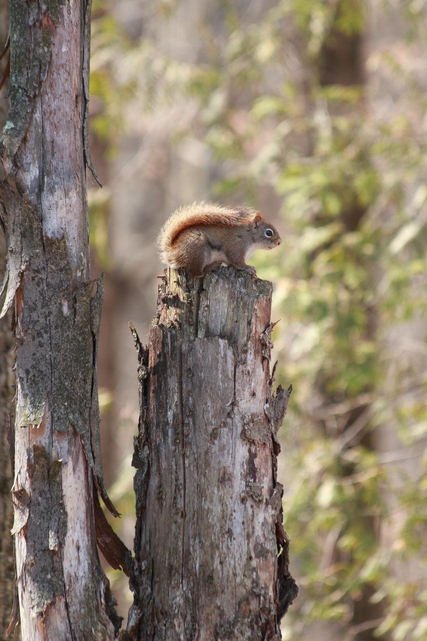 Alexandra Beauregard Haut dans les arbres