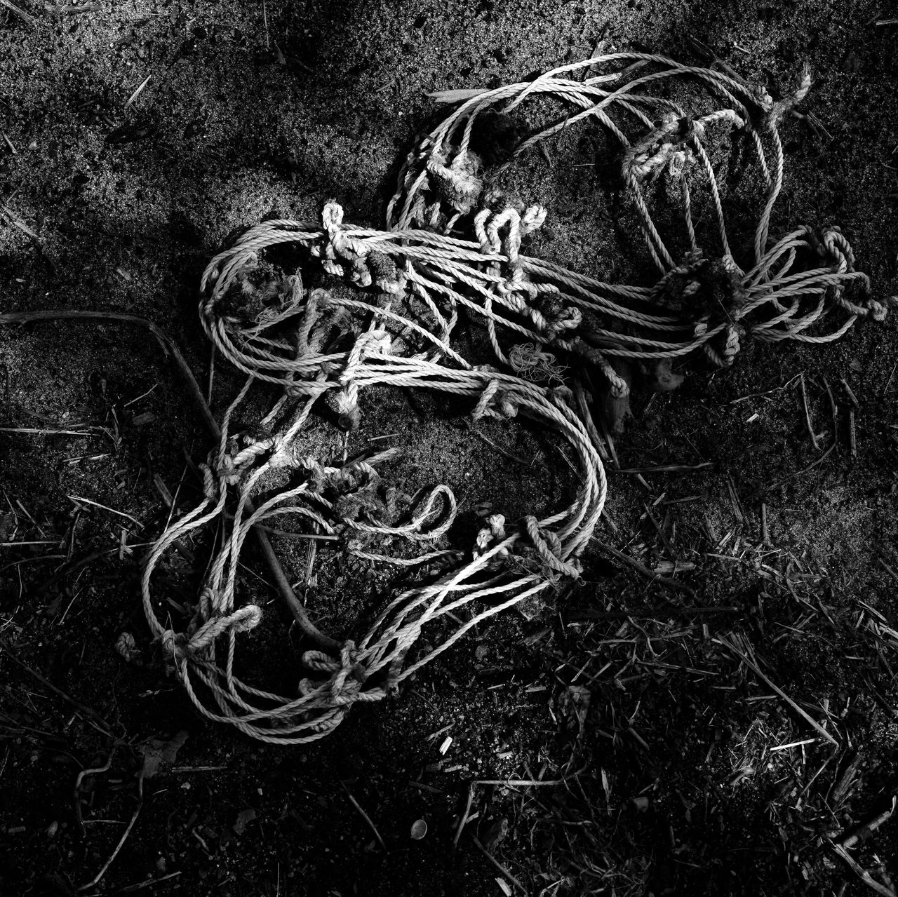 ArtPhoto cordes n & b