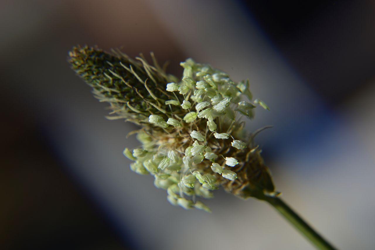 ArtPhoto mauvaise herbes