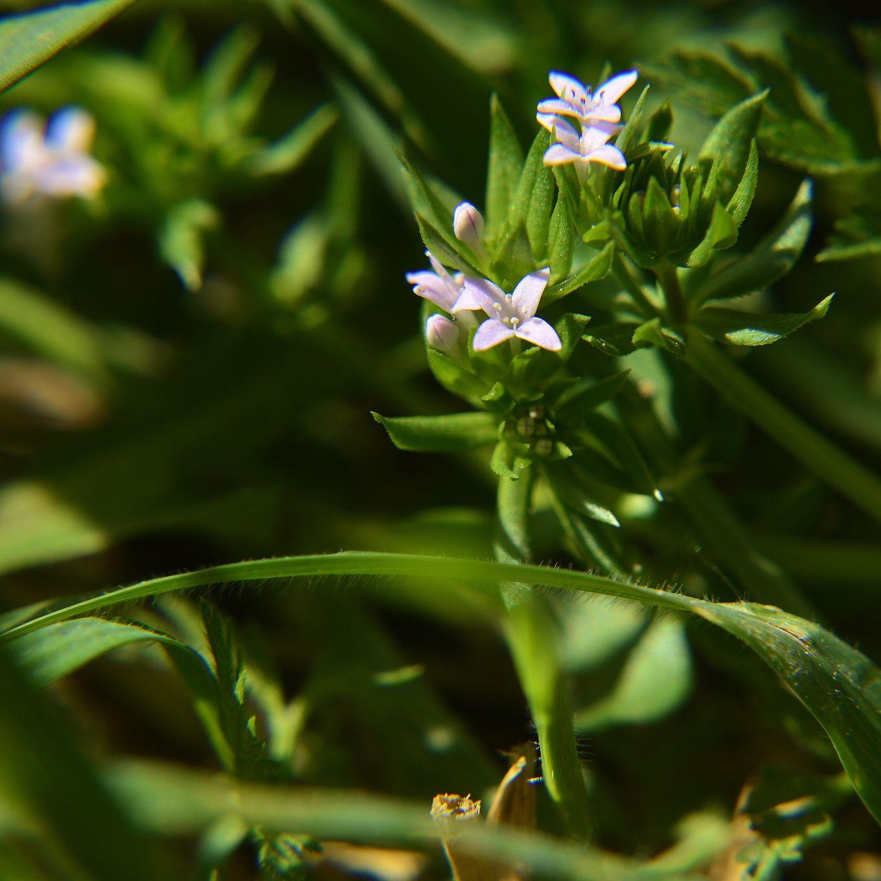 ArtPhoto petite fleur mauve