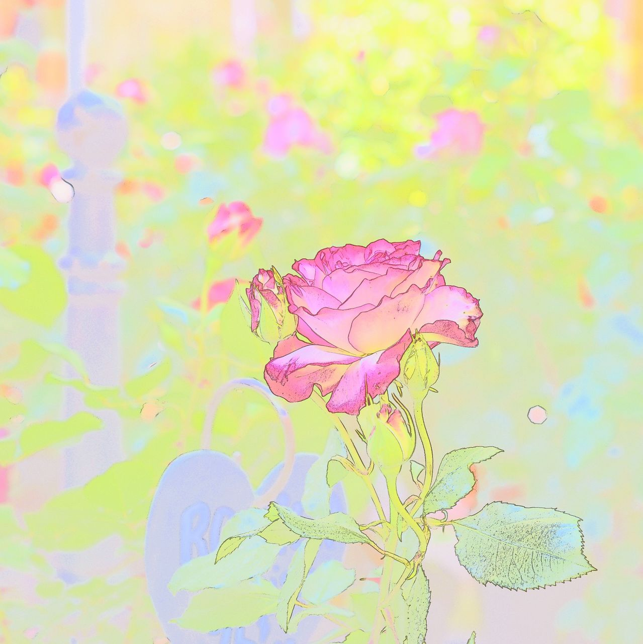 ArtPhoto Rose
