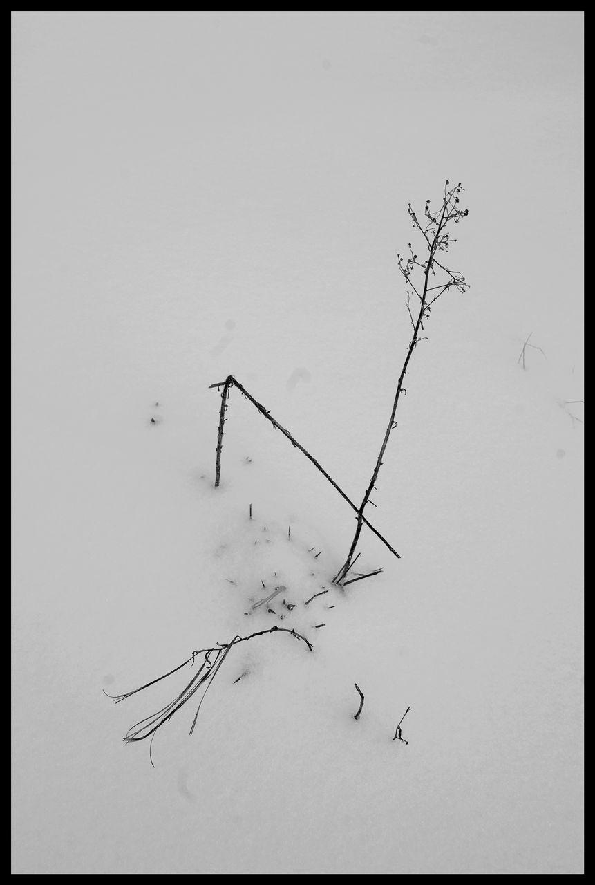 AZEMA Jean-Marc herbes-et-neige-2018-B