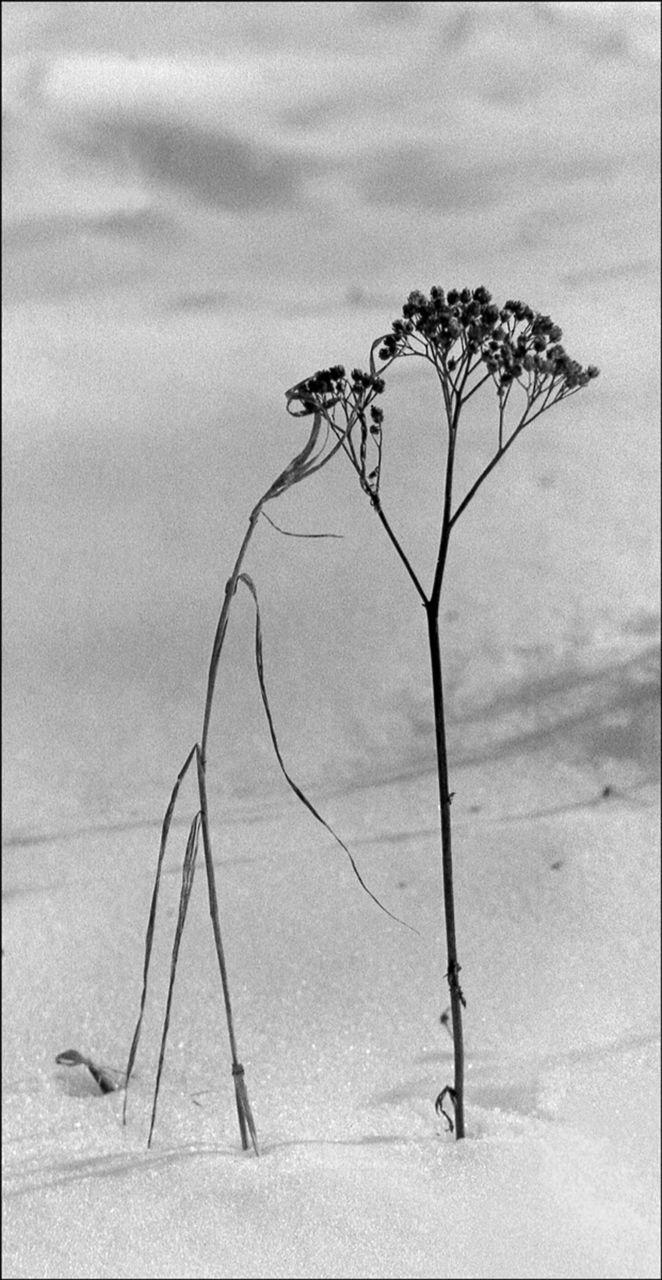 AZEMA Jean-Marc herbes et neige D