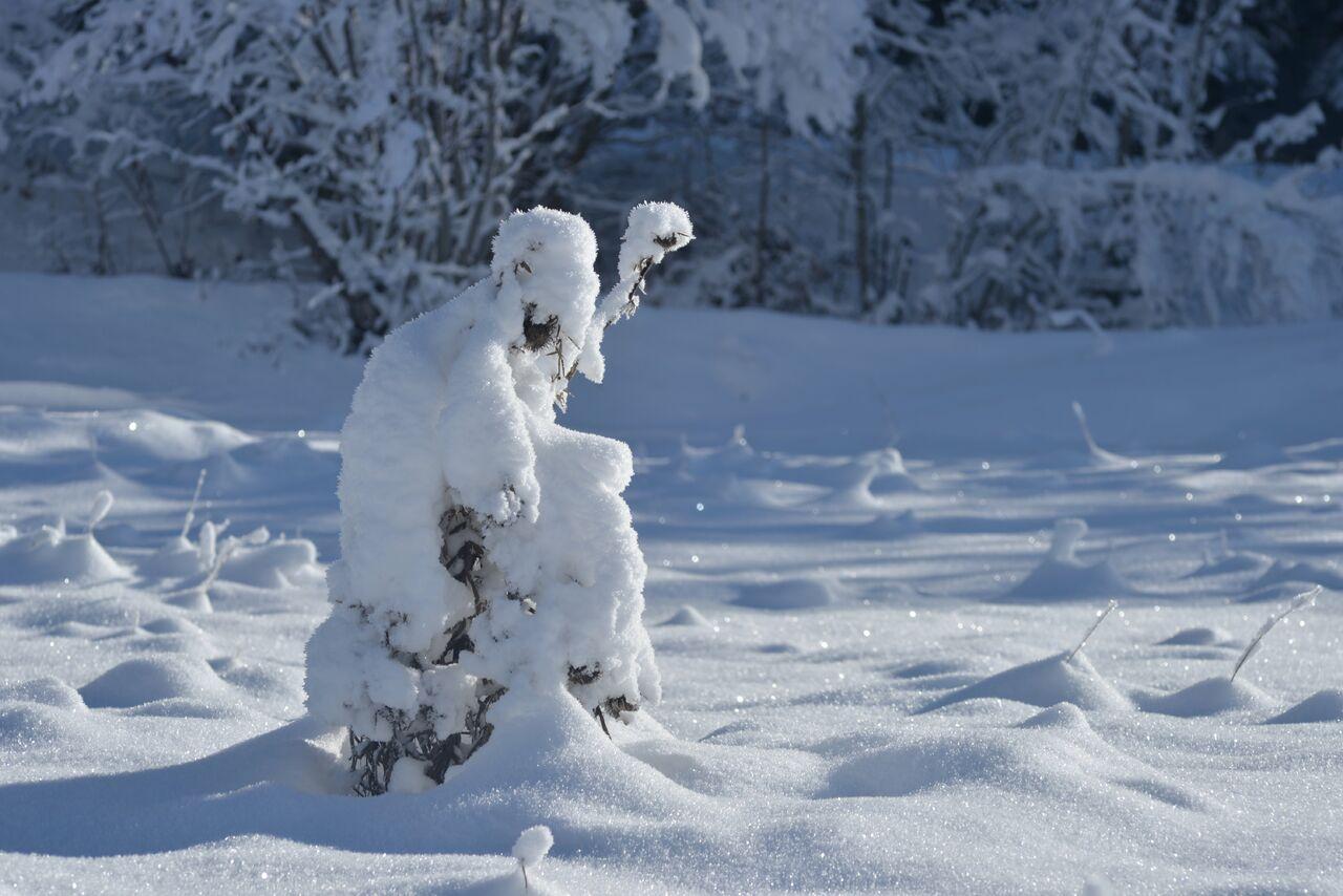 BARRE Yvon même pas froid !