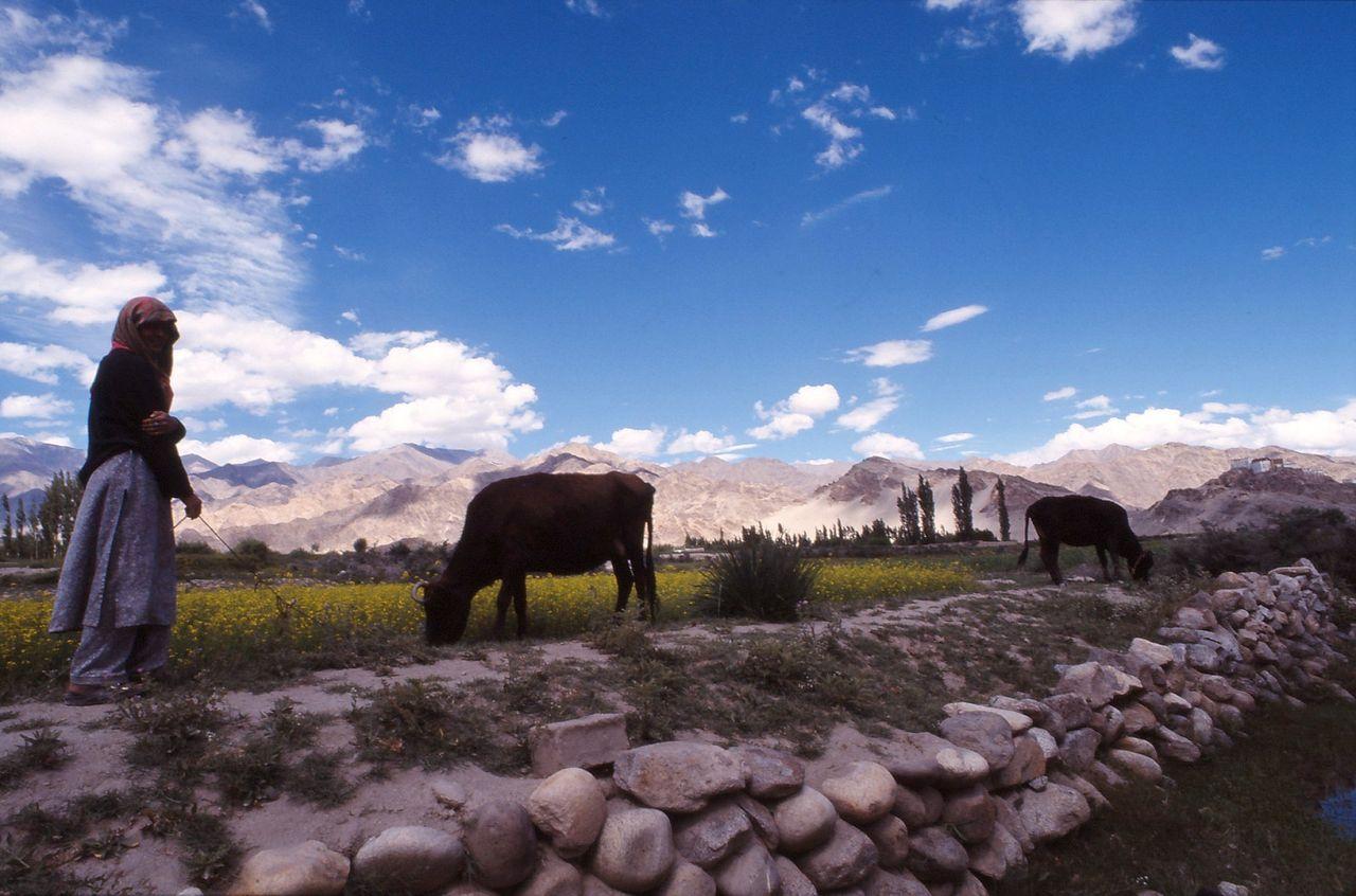 BARRE Yvon Ladakh  (5)
