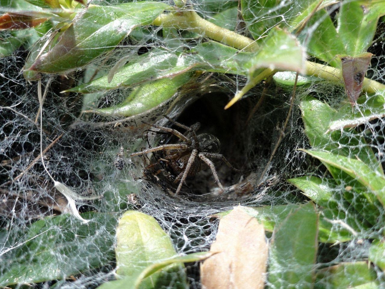 Basile Châtelain dans mon nid