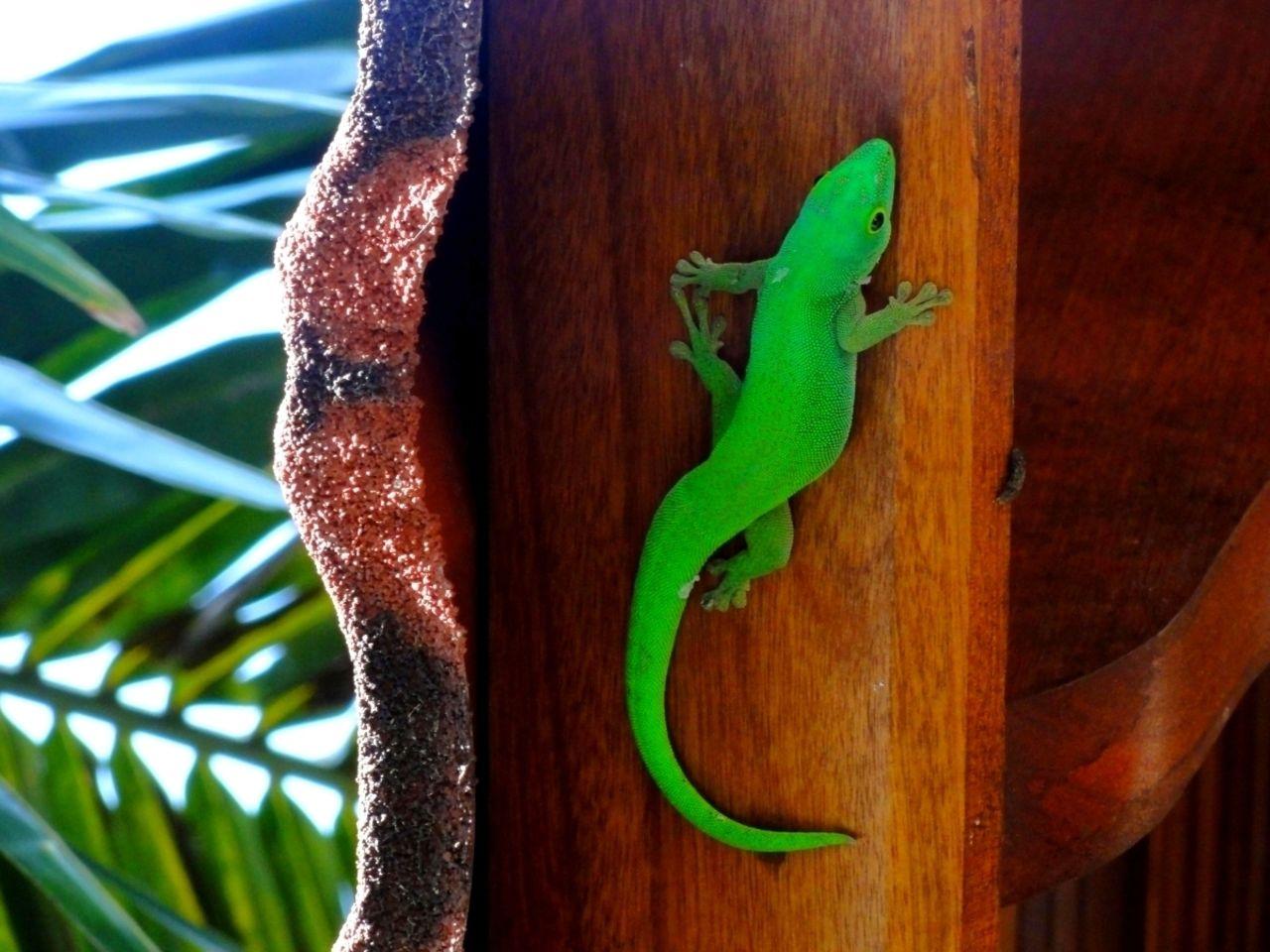 Basile Châtelain gecko vert