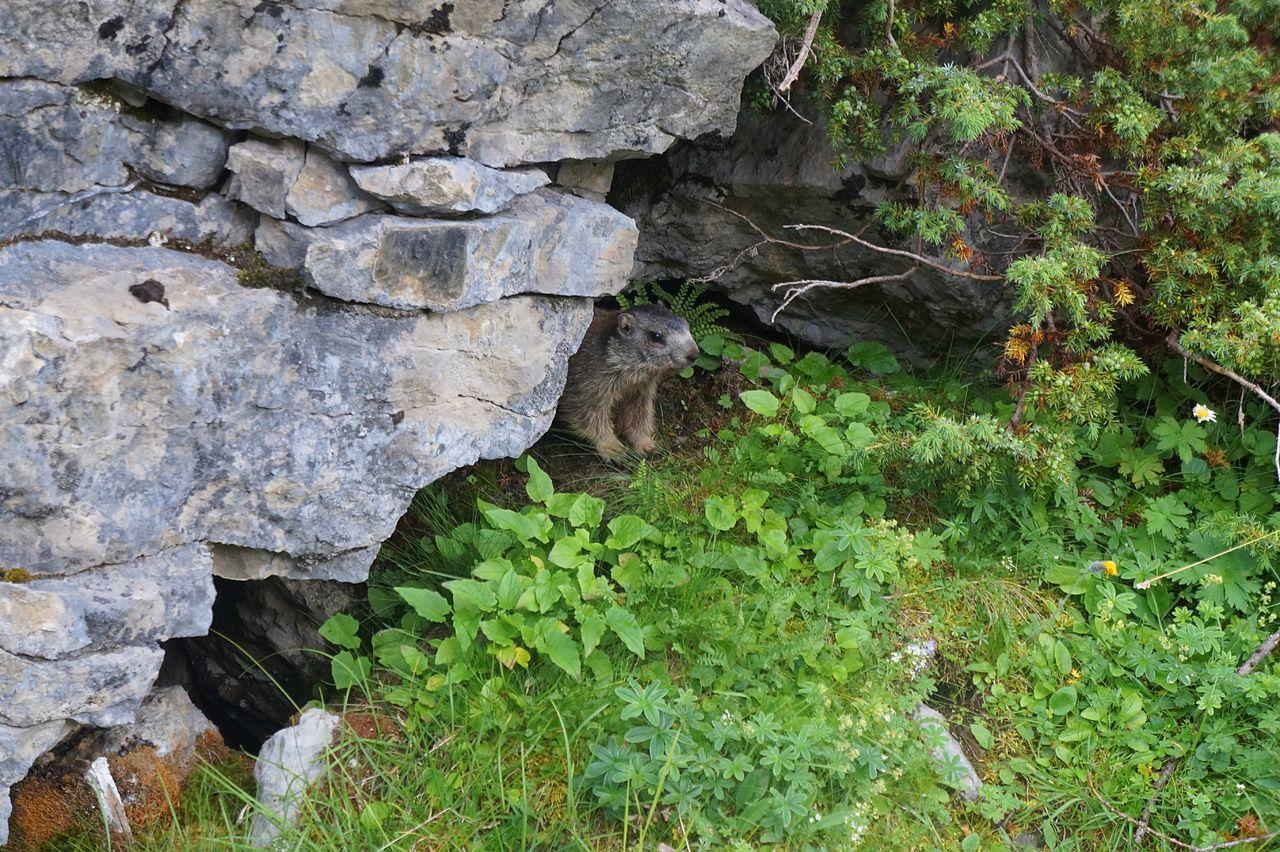 Basile Châtelain paparazzi de marmotte