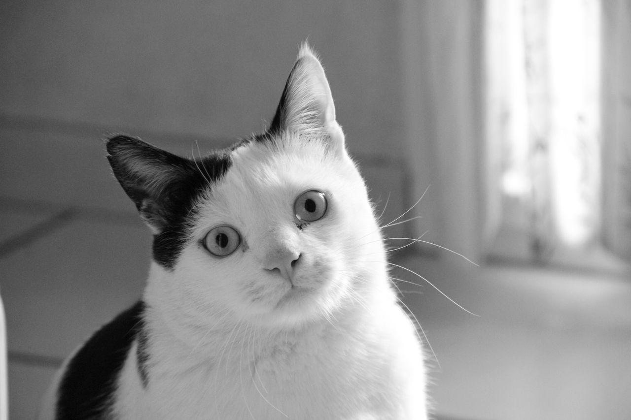 Catherine GRENOUILLAT Le chat de mes enfants