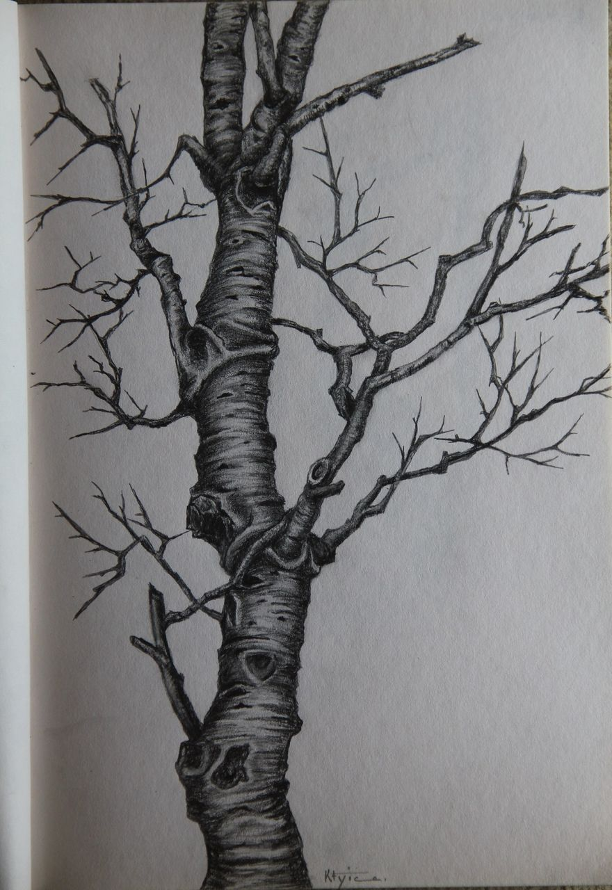Catherine GRENOUILLAT Tronc d'arbre