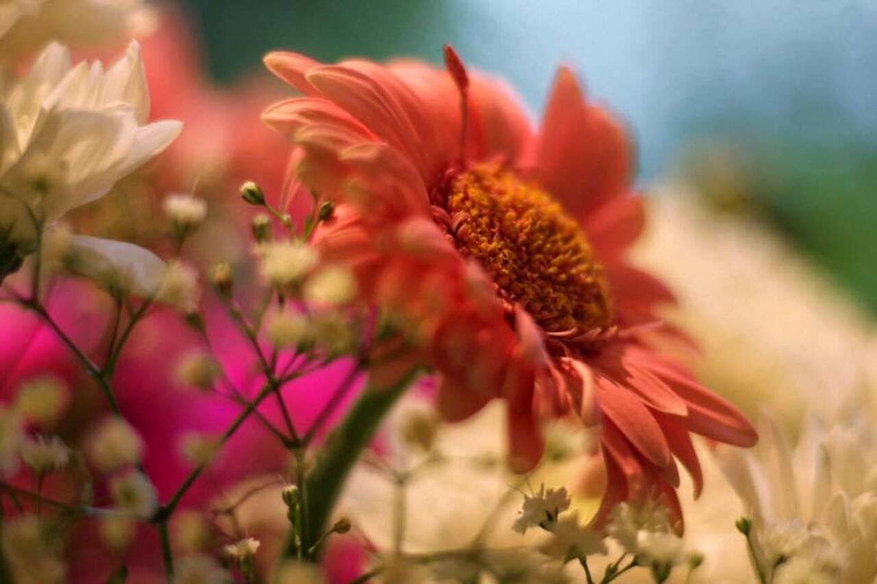Catherine GRENOUILLAT Fleurs offertes