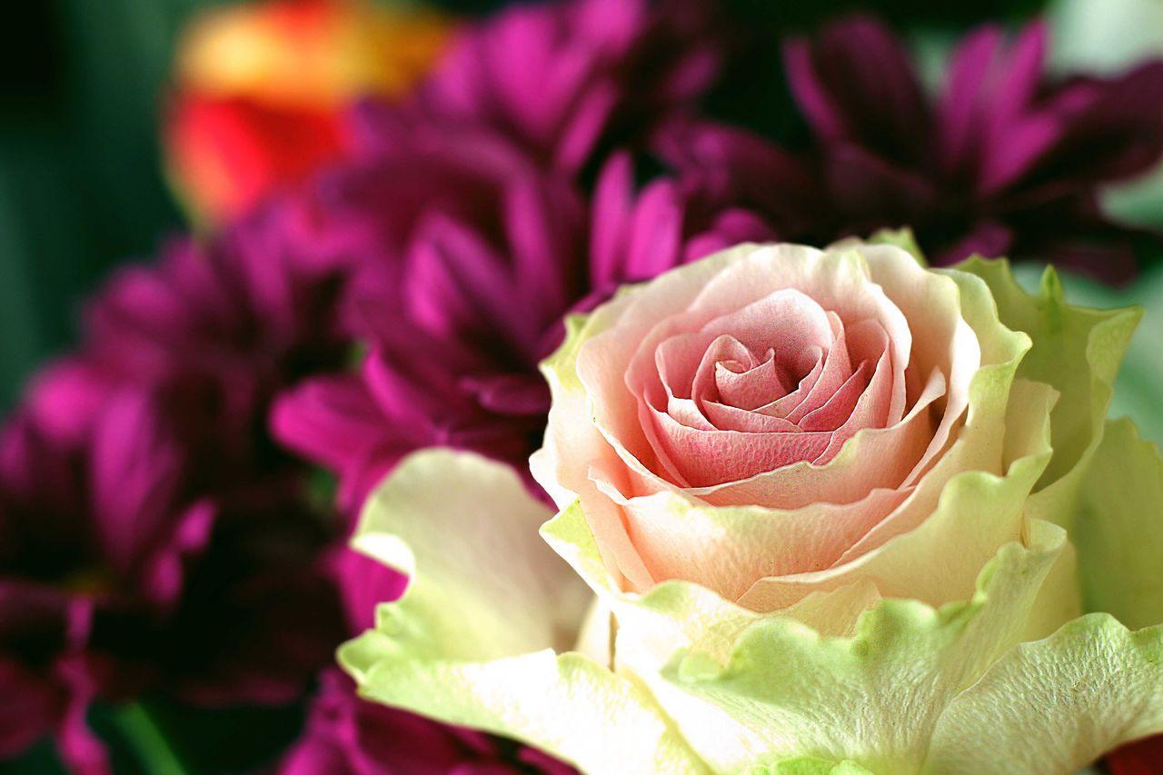 Catherine GRENOUILLAT Rose d'anniversaire