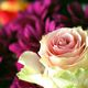 Catherine GRENOUILLAT - Rose d'anniversaire