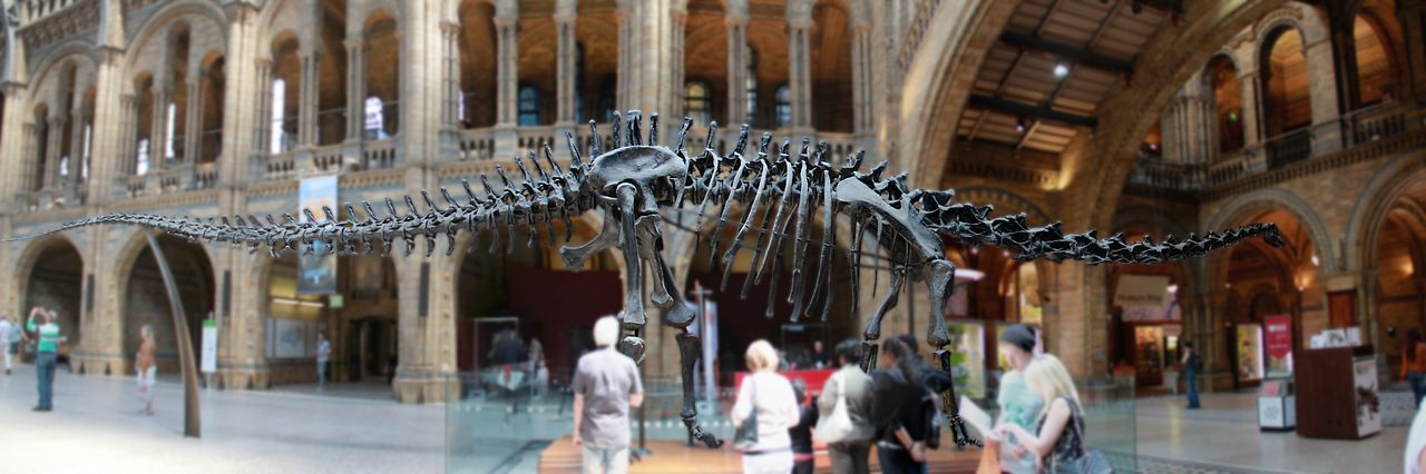 Catherine GRENOUILLAT Dinosaure - Croisé en Angleterre