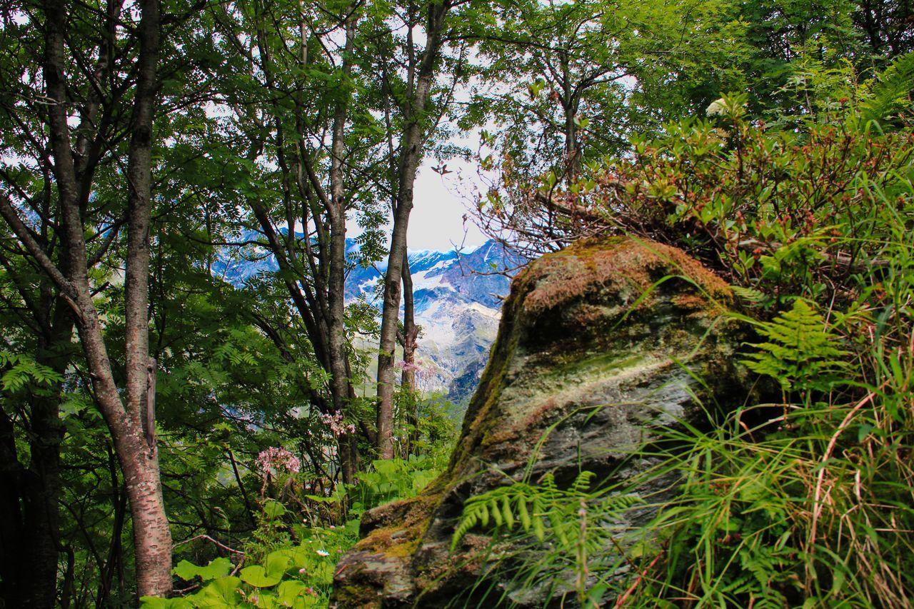 Catherine GRENOUILLAT La Montagne, la Savoie