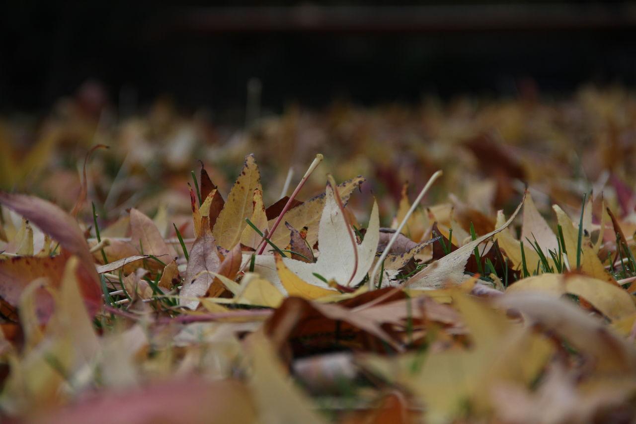 Catherine GRENOUILLAT Les traces de l'automne