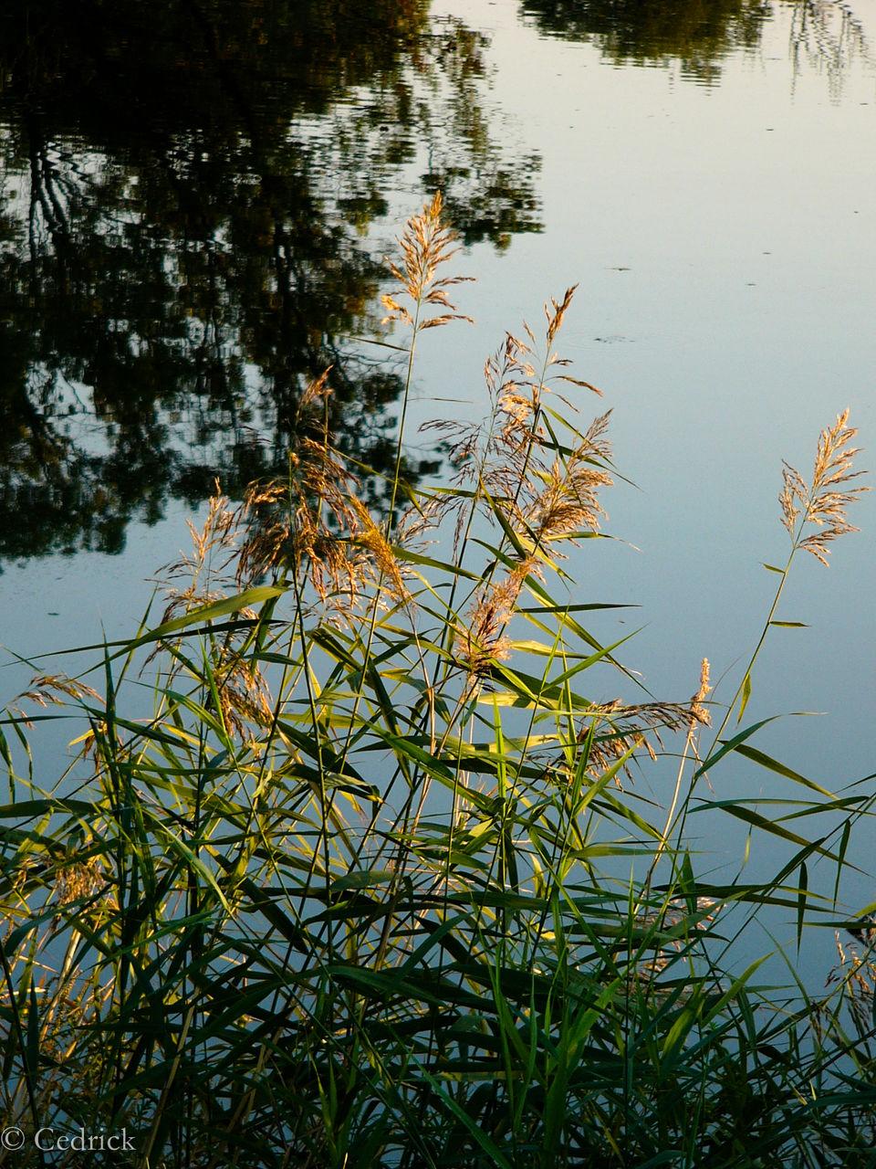 Cédrick Tux Lac des goules