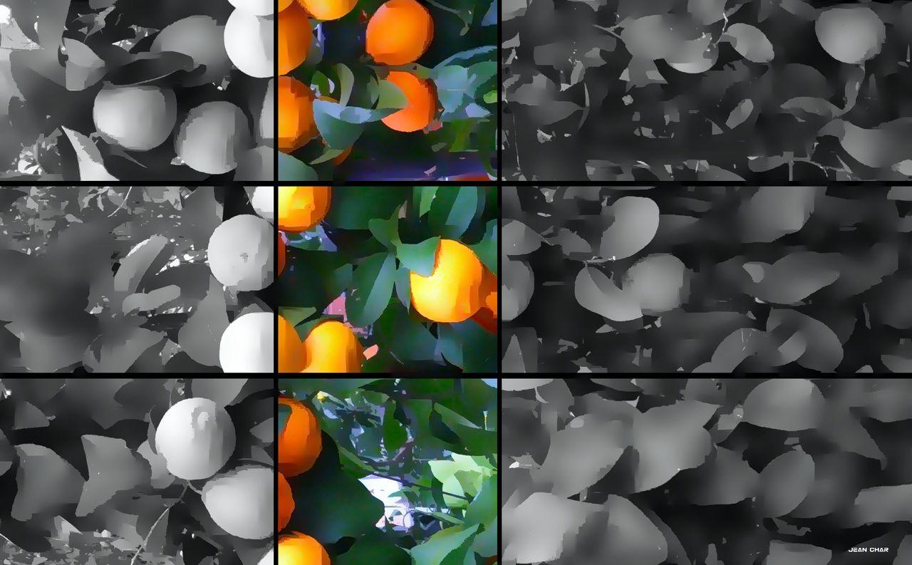 CHAR Jean Oranges