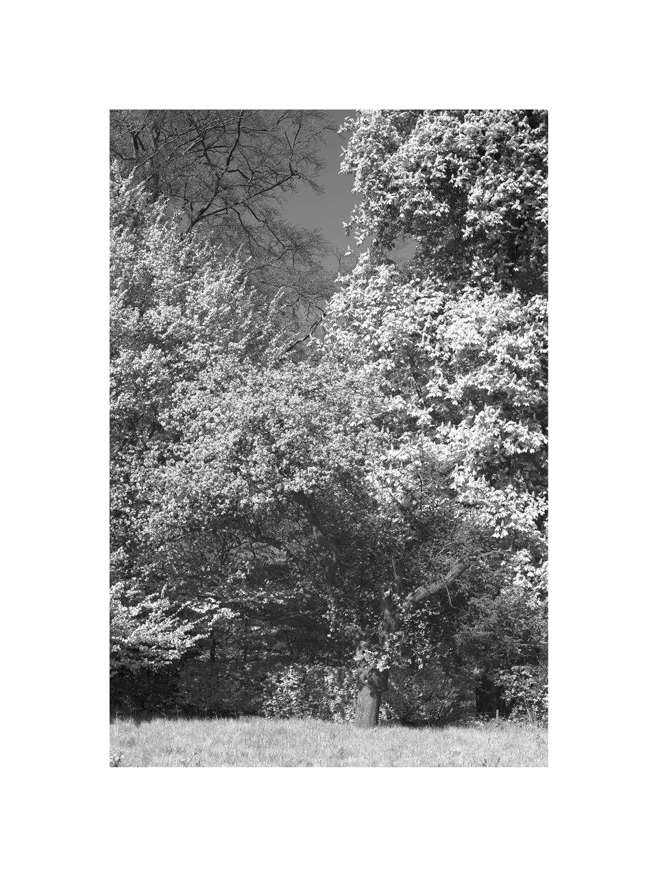 Dan Van Orbeek IMG_6037-Récupéré