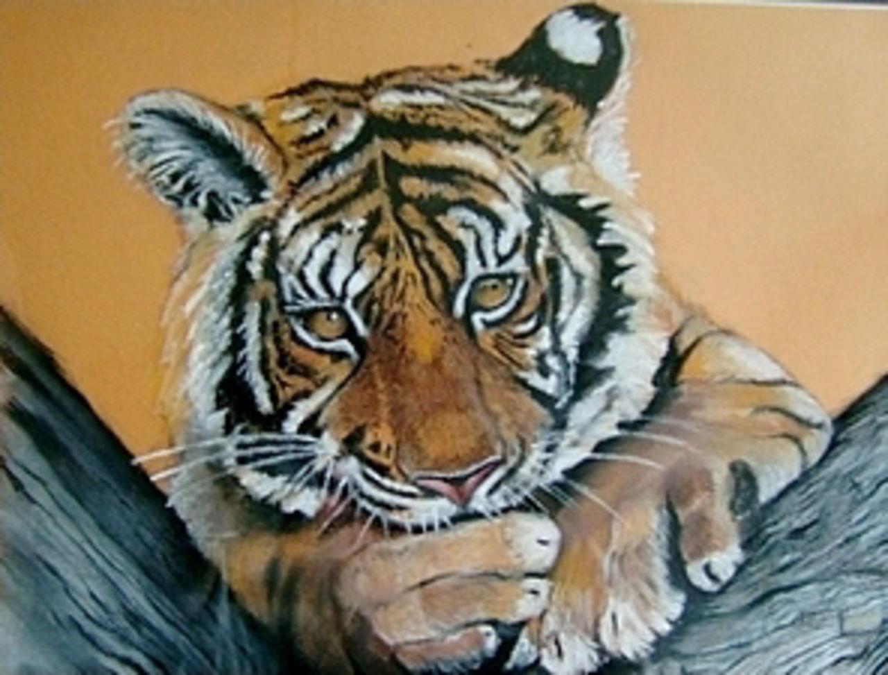 Daniel Riba jeune tigre