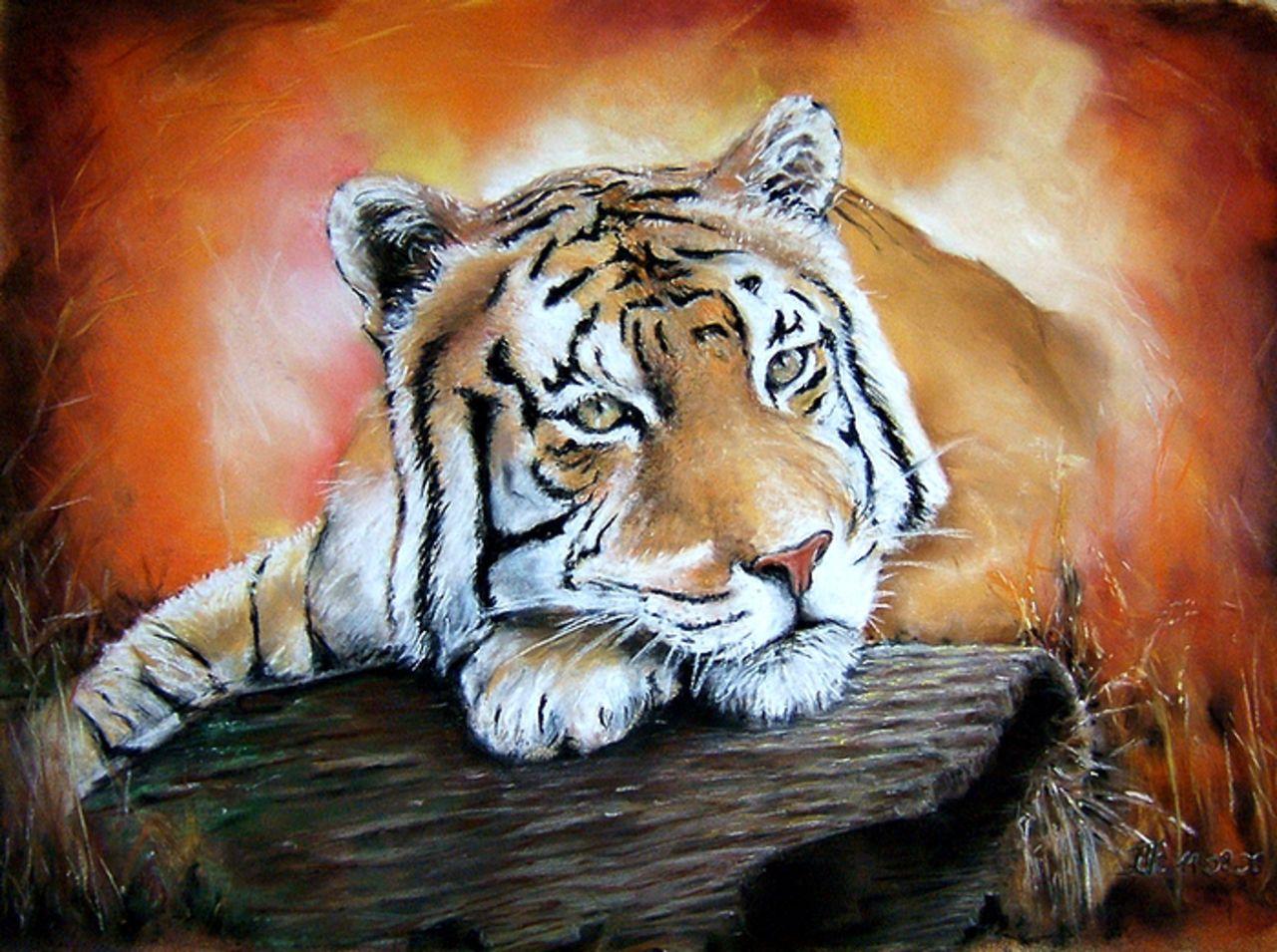 Daniel Riba tigre au repos