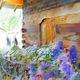 Danielle Arnal - fleurs de montagne N2