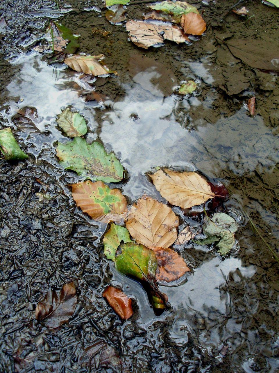 Danielle Bellefroid Les feuilles mortes