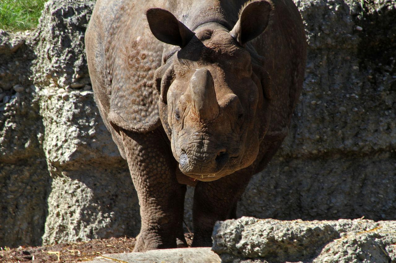 Didier Harmant Rhino
