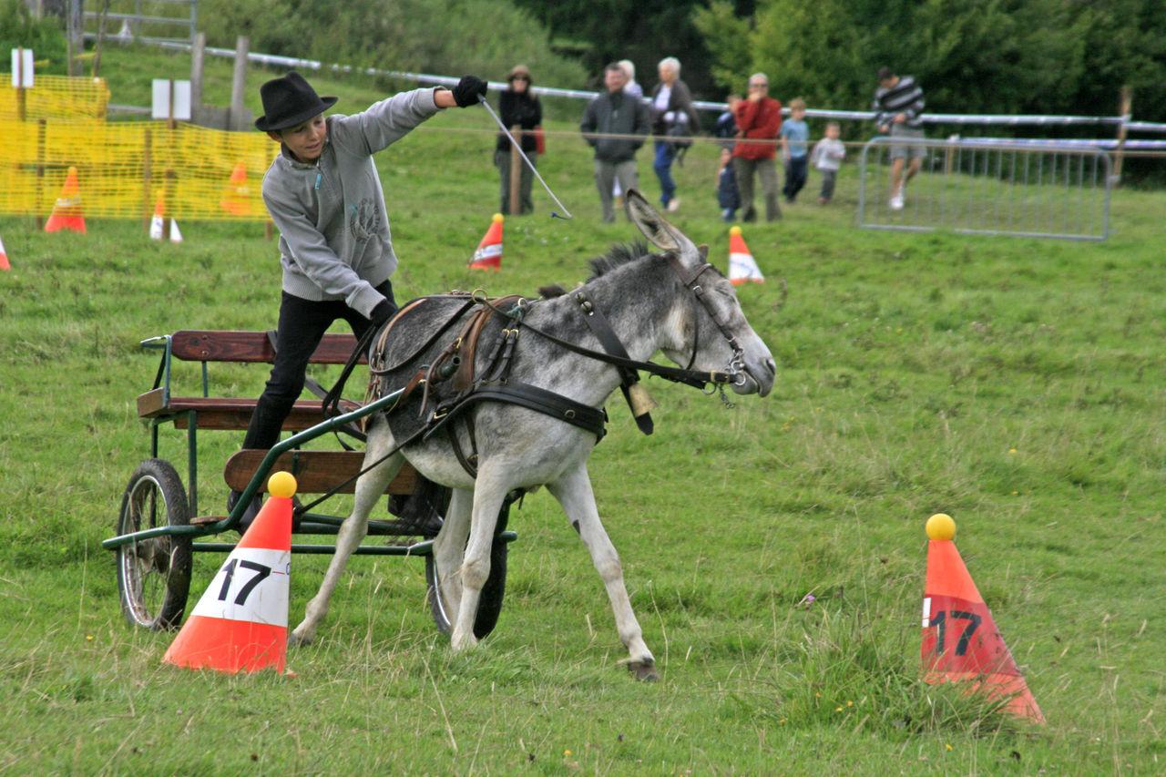 Didier Harmant Attelage d'âne
