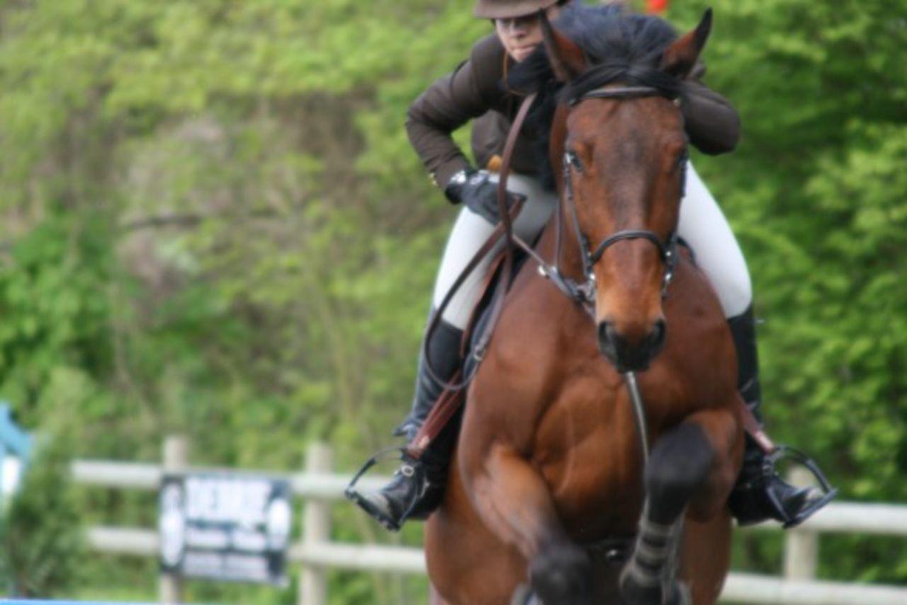 Didier Harmant Concours de saut