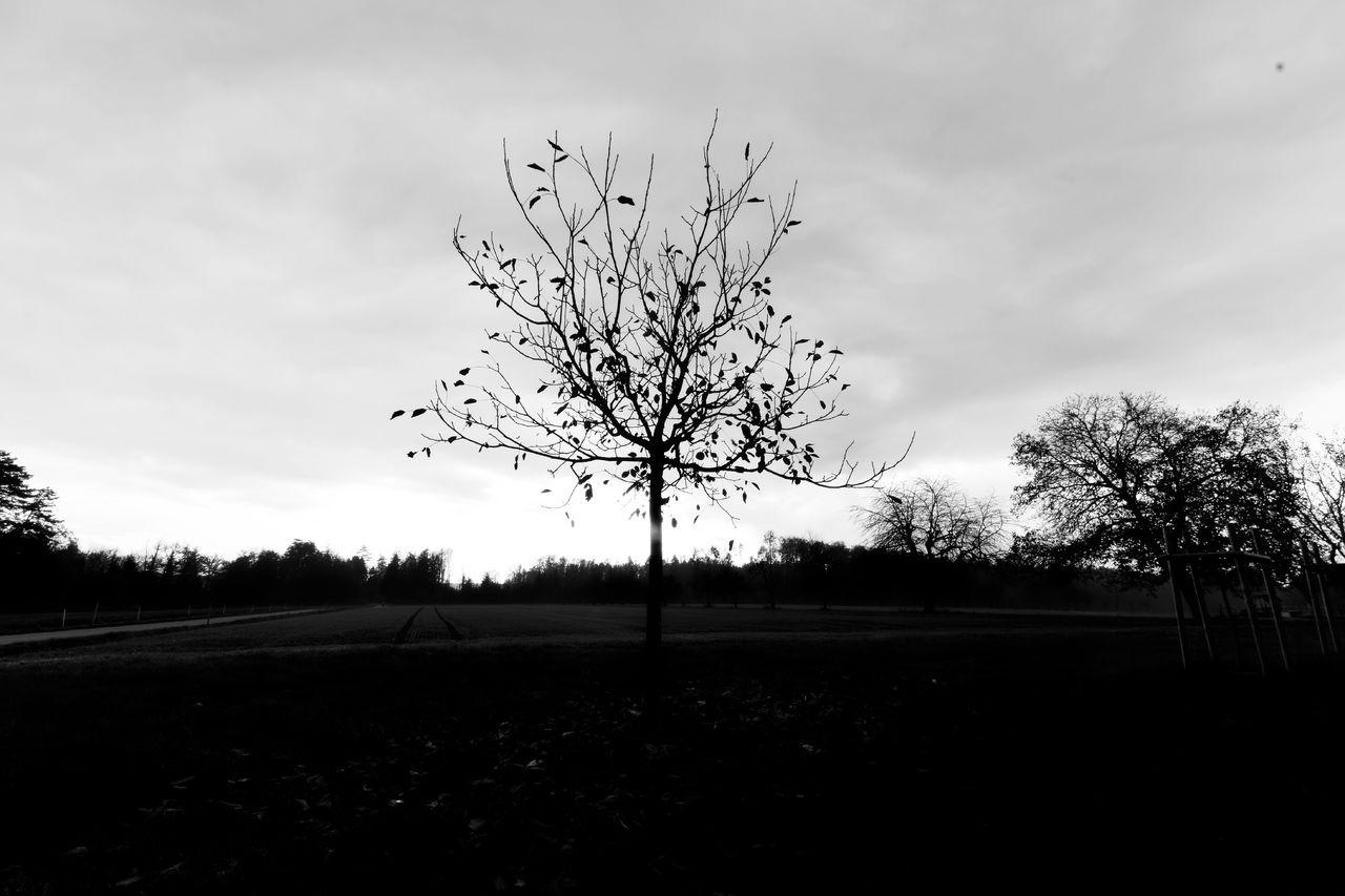 Erwan Bourquard 18 Les arbres