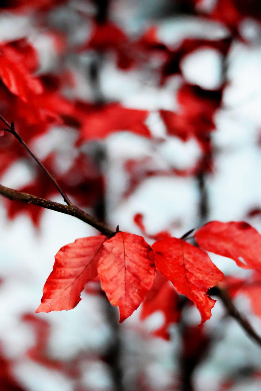 Erwan Bourquard 37 Les feuilles