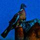 frédéric perrin - pigeon verve