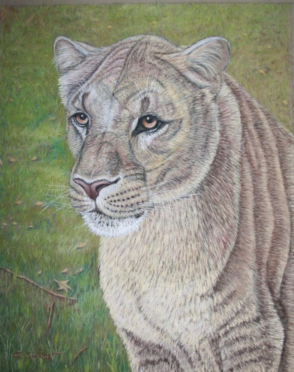 Gérard GERMAIN lionne