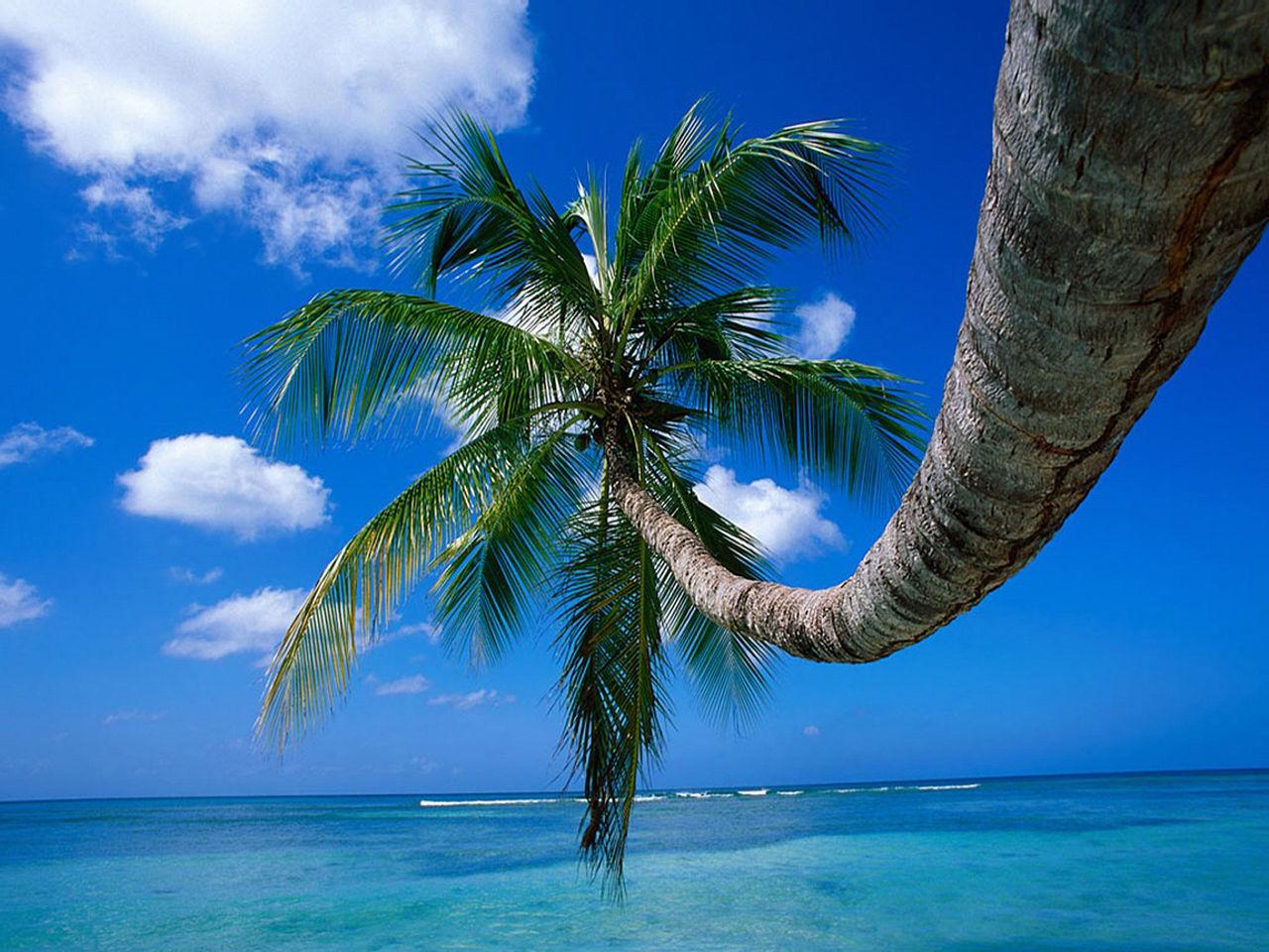 Guillaume Belche Wallapaper - palmiers