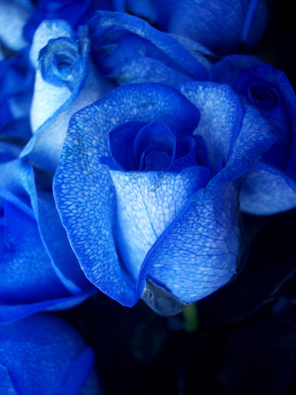 Guillaume Belche Wallpaper fleur bleue