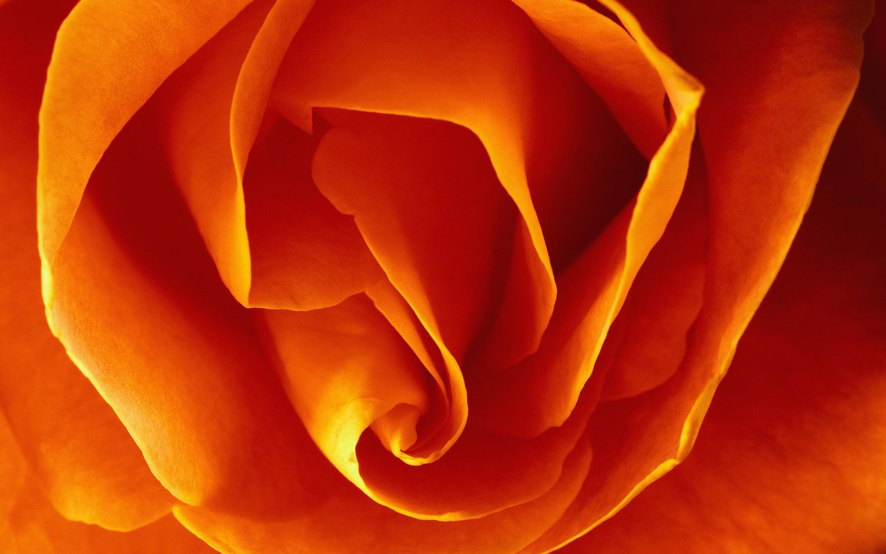 Guillaume Belche Wallpaper - Fleur Orange