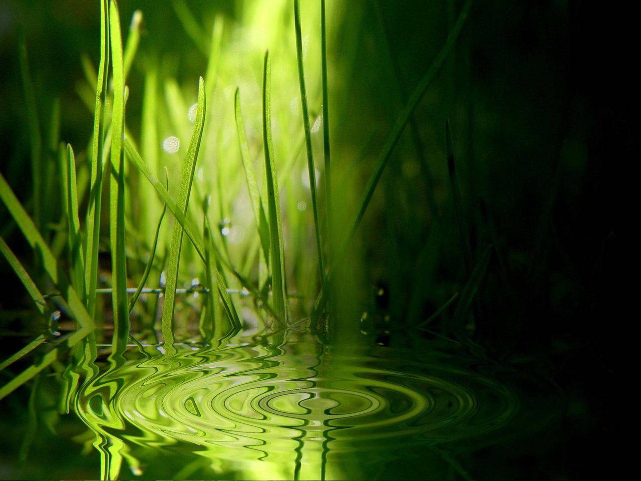 Guillaume Belche WallPaper - grass