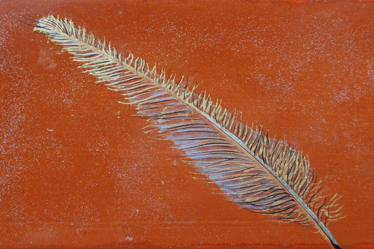 Jeanne-Marie Beuzard Plume d'aigle royal