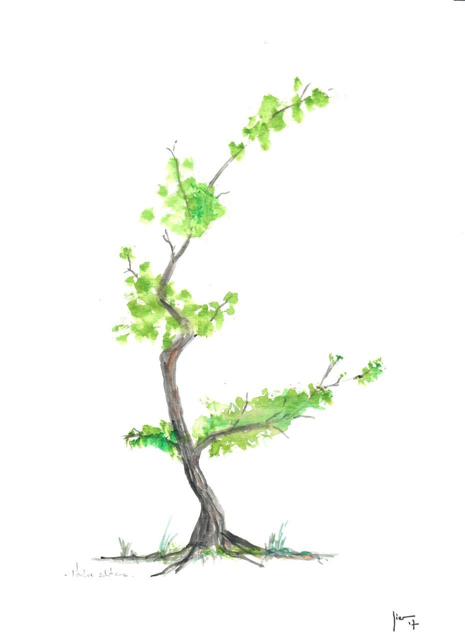 Jérôme SCHREIBER L'arbre solitaire