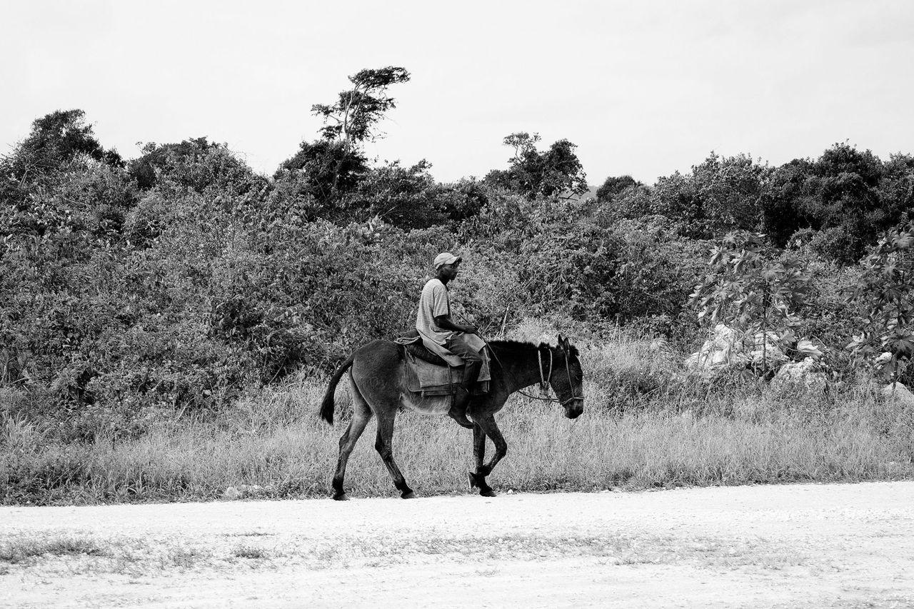Johanne Di Narzo À dos d'âne