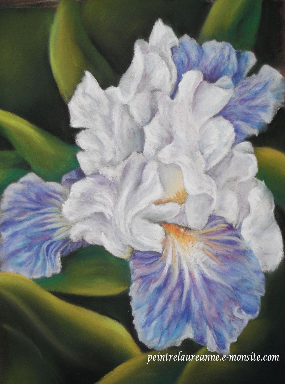 laure-anne barbier Iris bleue