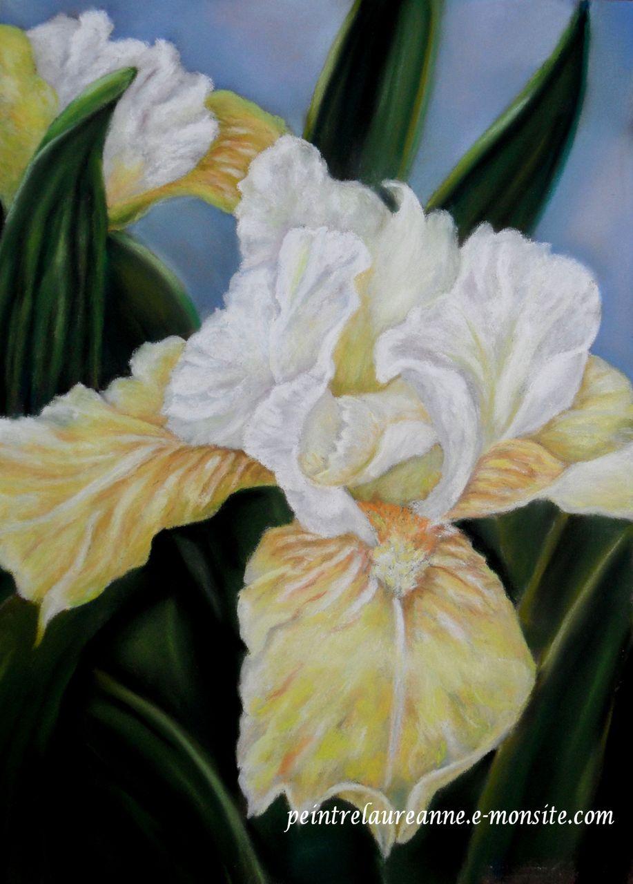 laure-anne barbier iris jaune