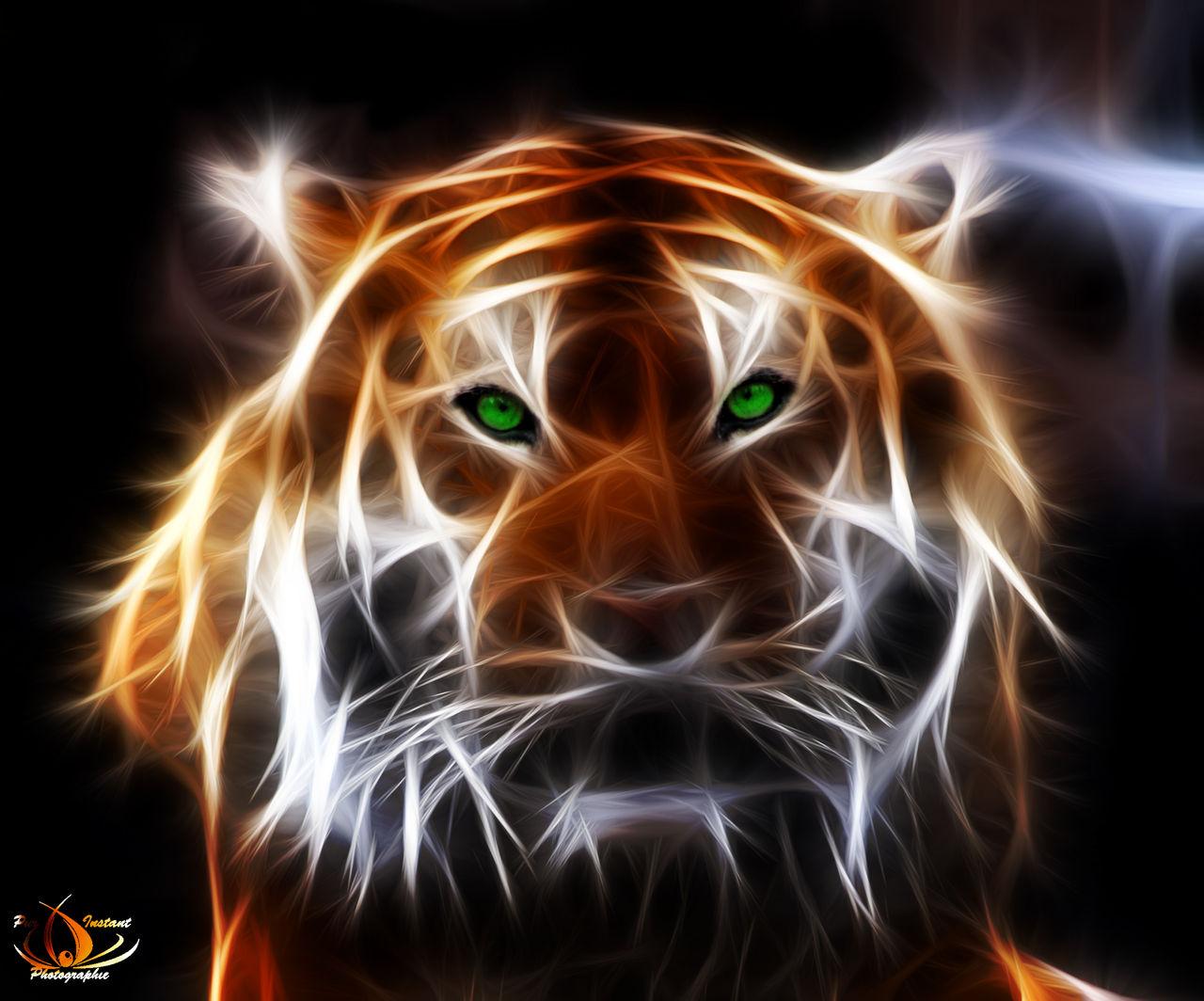 Maeve Photos fractalus tiger