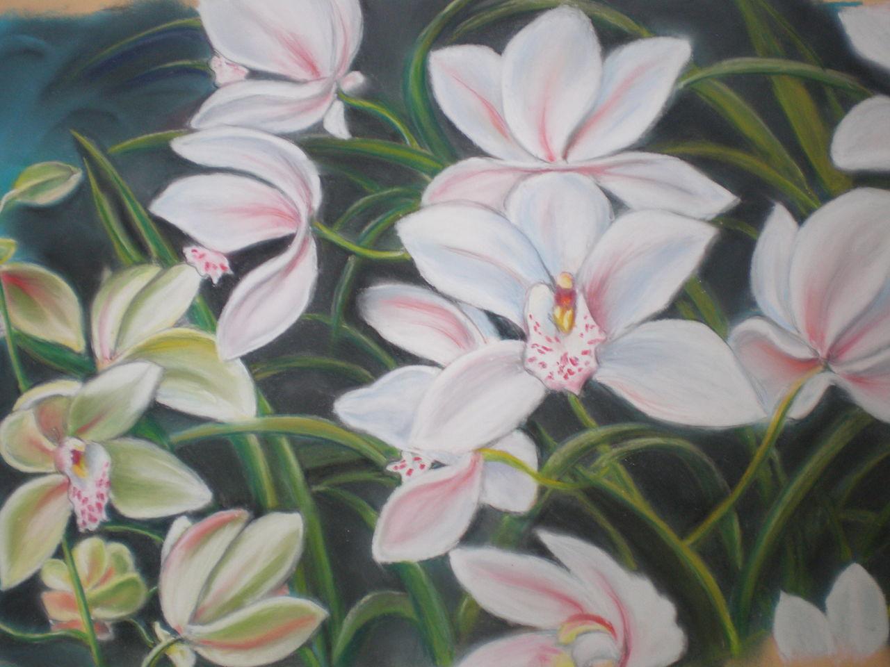 Marie Claire  Ricaux orchidée