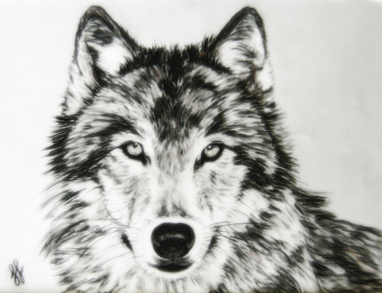 Maya Gama Loup