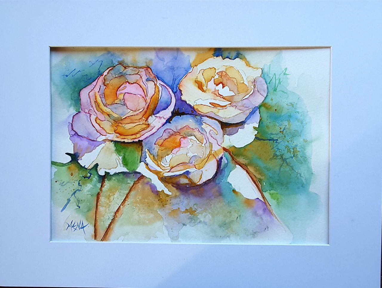 MENA Roses